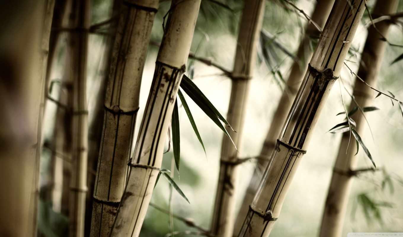 ,бамбук, серый,