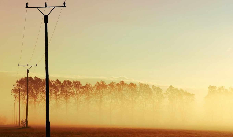 туман, погода, android, pozadine, margarida, pétalas, ветер,