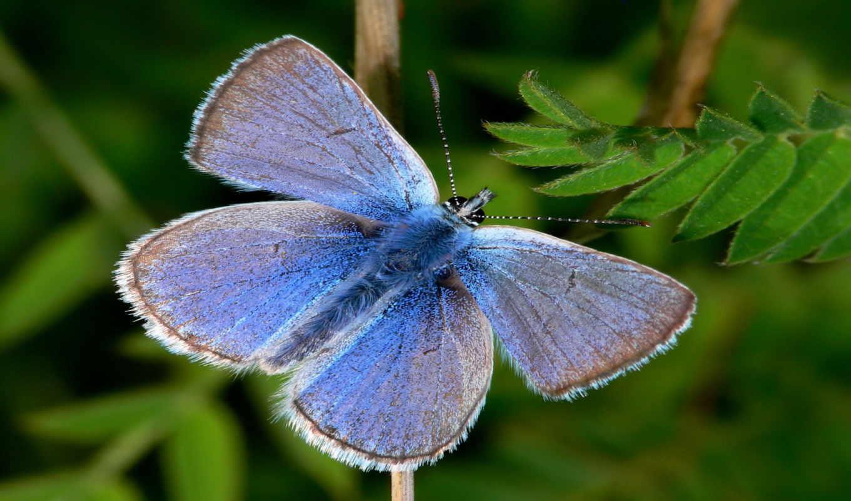 , природа, красивые, бабочка