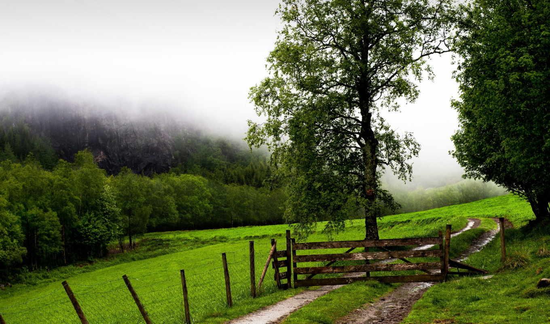 забор, поле, ворота, туман, деревья, дорога, doğa, sisli, картинка,