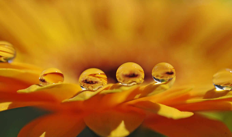 роса, оранжевый, цветок, капельки,