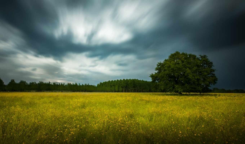 дерево, поле, flowers, природа, landscape, time, красивые, природы, winter, лес,