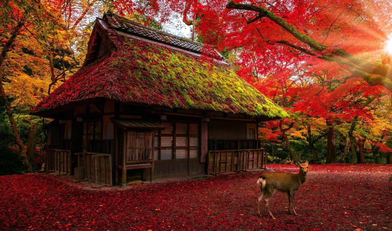 art, лань, japanese, park, nara, shutterstock, house, leaf, вектор, фото, изба