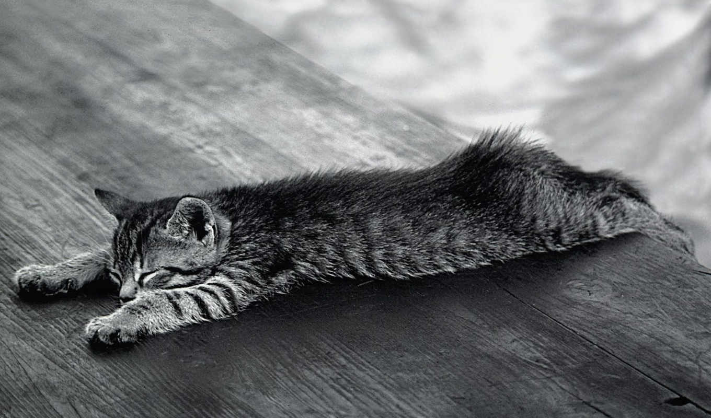 , кот, sleeping, чёрнобелый, котенок, you,