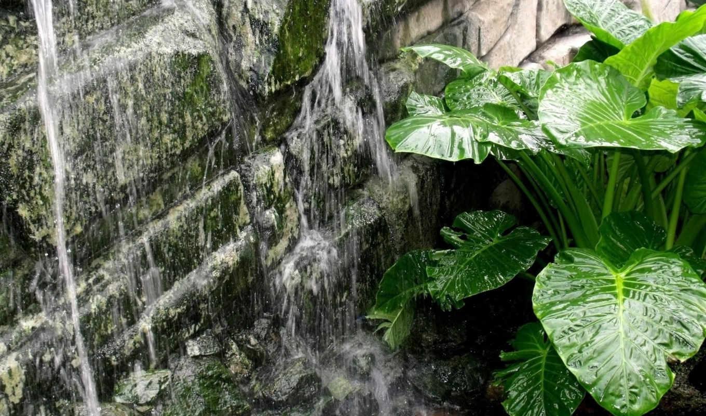 природа, источник, вода, цветок, зеленые, листья, большие, ткамни, мох, льётся,