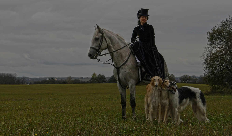 дама, женщина, лошадь, собаки, гончие, охота