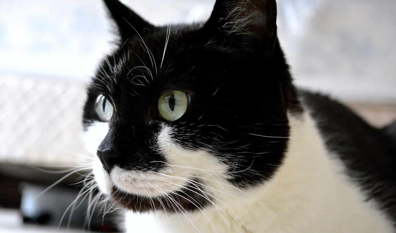 коты, заставки, графика, фотографий, кошки, red,
