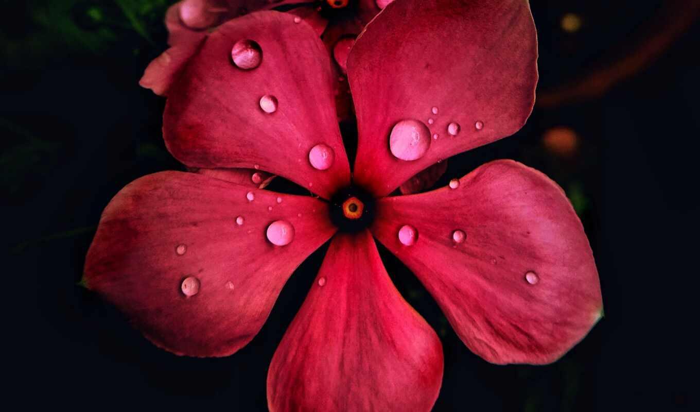 лепесток, цветы