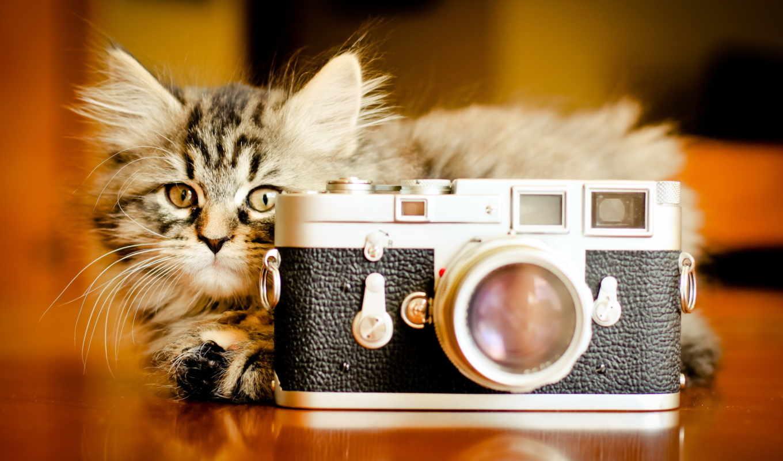обои, фотоаппарат, котенок, кошка, за, кошки, кот,