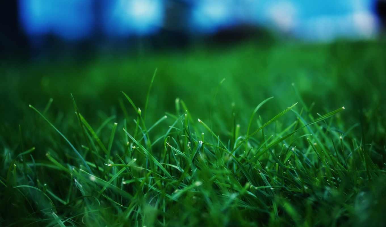 трава, макро, выглядит, зелёный, природа, chameleon, цветы, сочная,