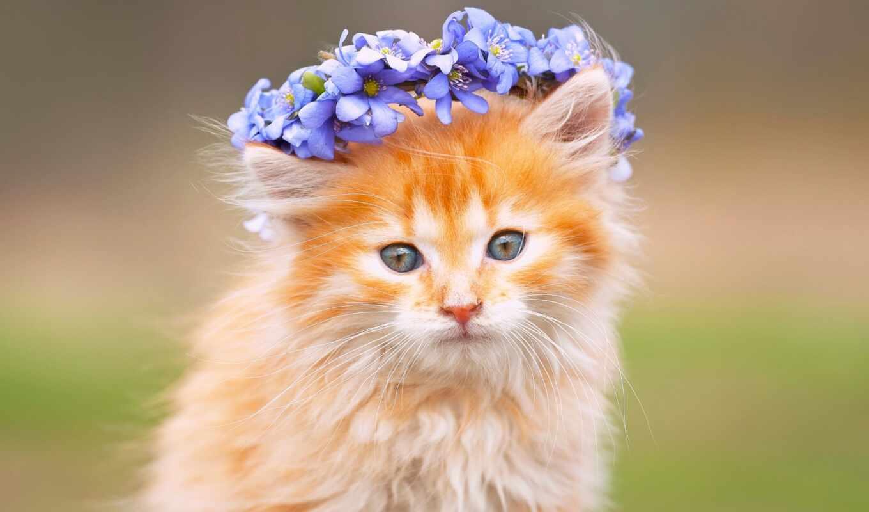 кот, венок, red, цветы, морда, котенок, animal, бакенбарды