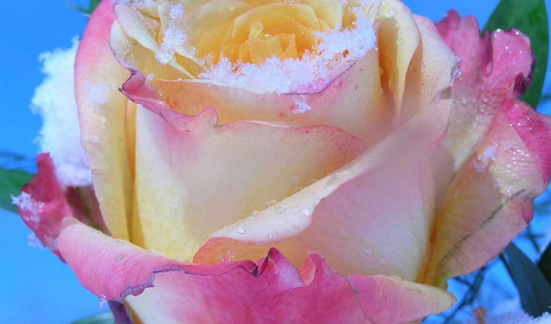 закладки, damla, днем, от, если, роза, мы,