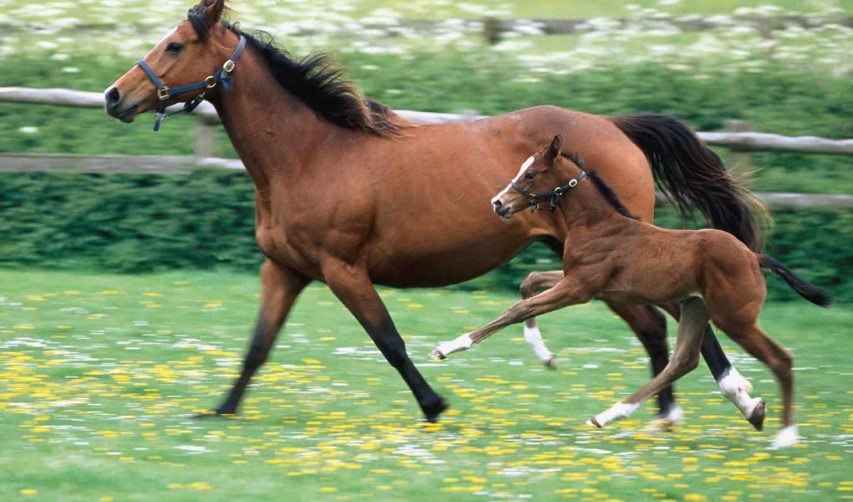 лошади, лошадь, лошадей, жеребенок,