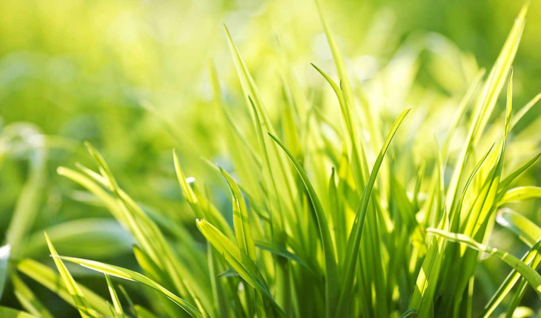 зелёный, summer, весна, свежесть, трава, травичка, базе, качестве, высоком,