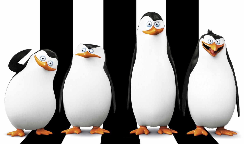 миньоны, пингвины, страница, мадагаскара, кунг, панда,