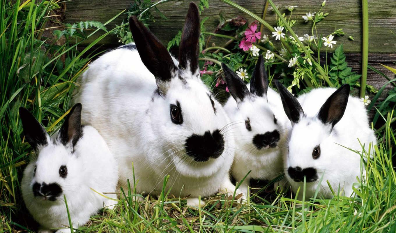 черные, изображение, животные, сборник, para, animals, animal, picsfab, кролики, отличных, великолепных, rabbits, conejos, кроликов, ушки,