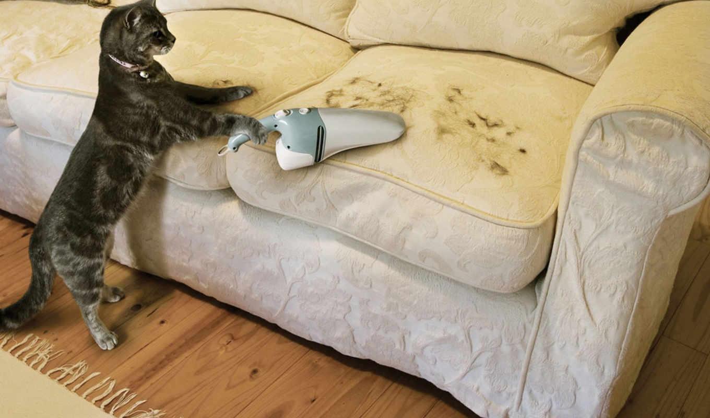 funny, cat, диван, картинка, пылесос, необычно, прикол, вид, шерсть, ad, смотрите,