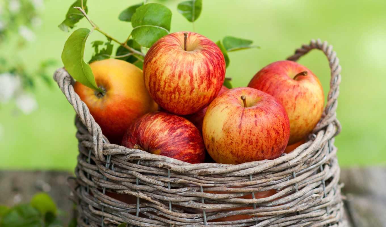 яблоки, фрукты, корзина, листья, картинка, осень,