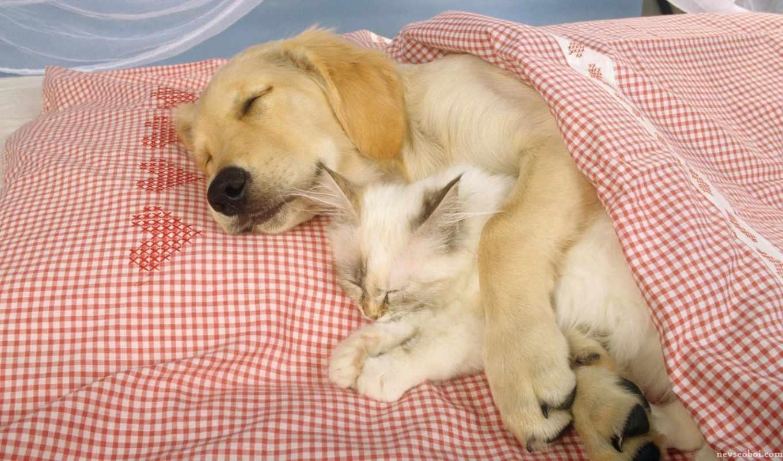 спят, тюлень, котенок, обнимку, песик, кот, животные,
