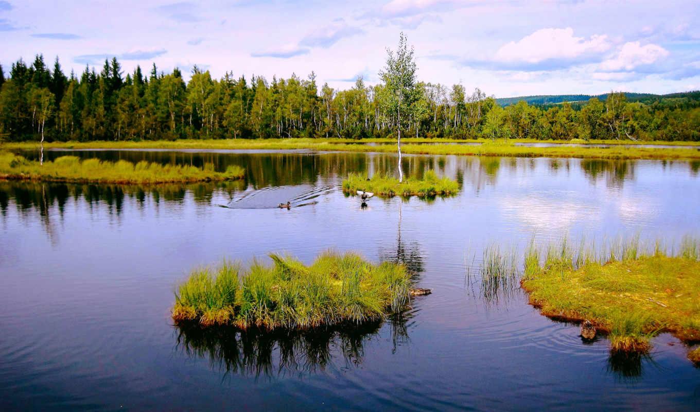 природа, деревя, леса, озеро, página, escritorio, para, gratis, fondos, июня, осень,