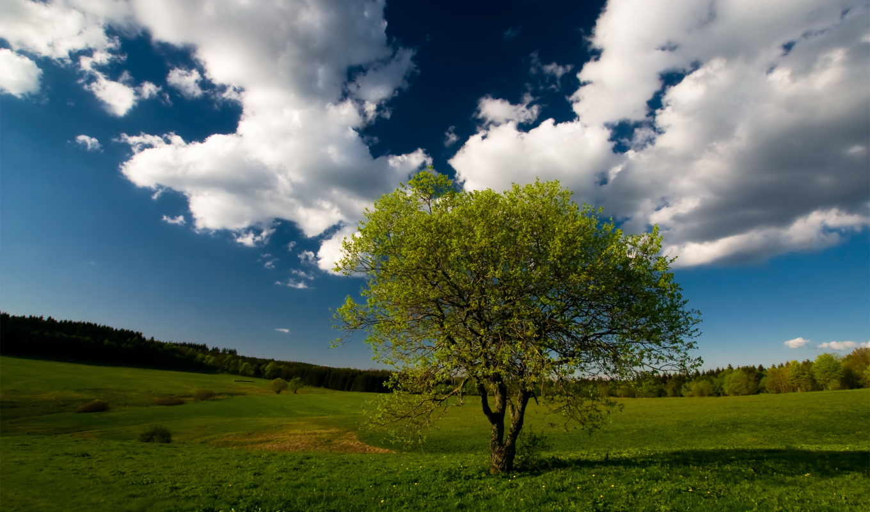 дерево, одинокое, поле,