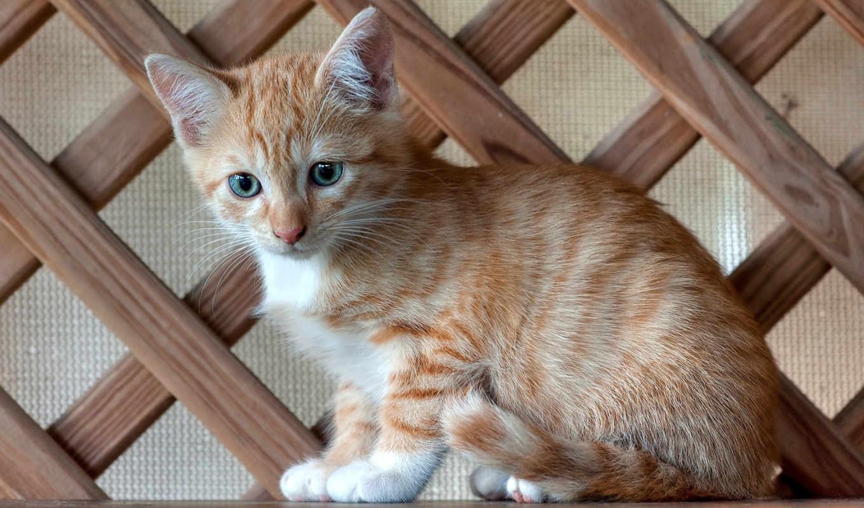 кот, cats, mobile, tapet, биг, iphone, baby, animals, картинка,