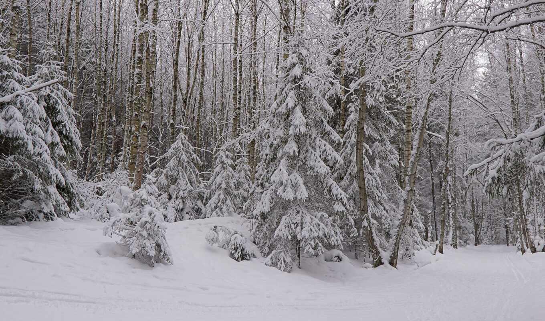winter, лес, снег, rezreshenie, fore, tapety