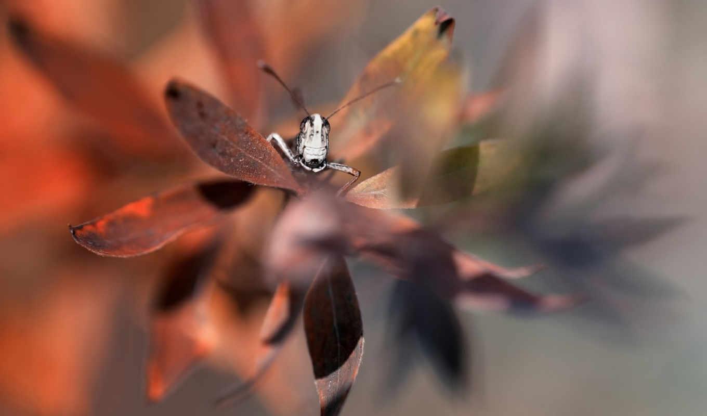 макро, insects, листочки, кузнечик,