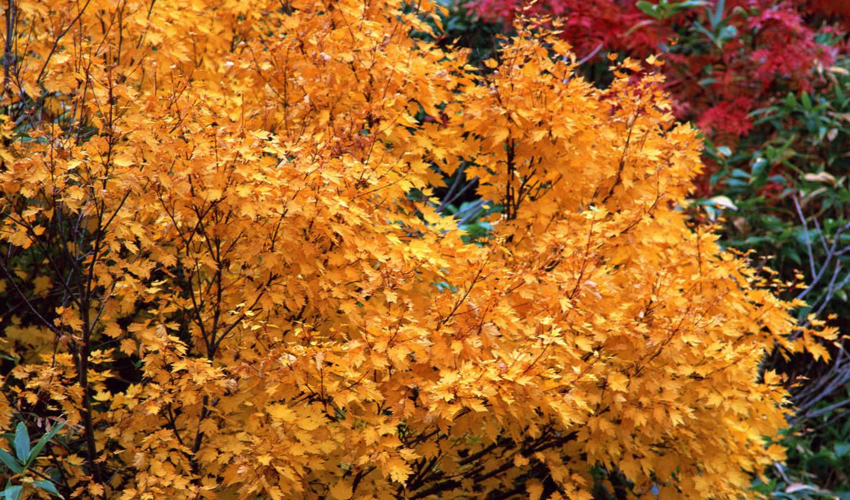 дерево, yellow, яркие, осень, листья, кб,