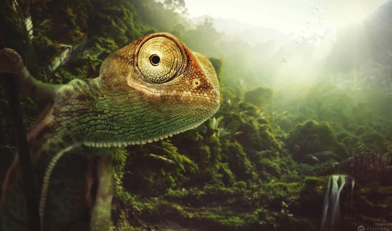 chameleon, zhivotnye,