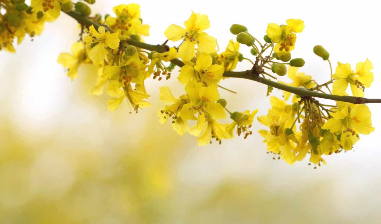 весна, цветы, branch, дерево, высоком, качестве,