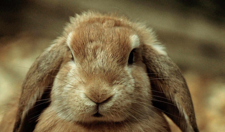 кроликов, носы, нос, почти, оказались, пять, time, чувствительными, же, эксперимент, повторили,