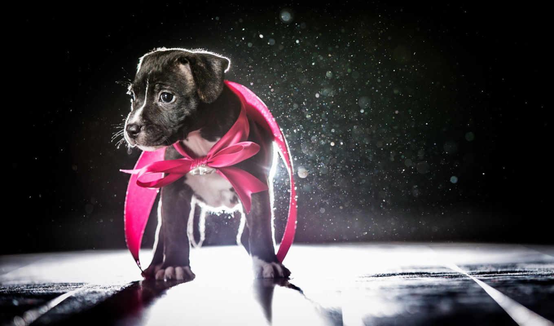 зооклубе, собаки, animal, amazing,