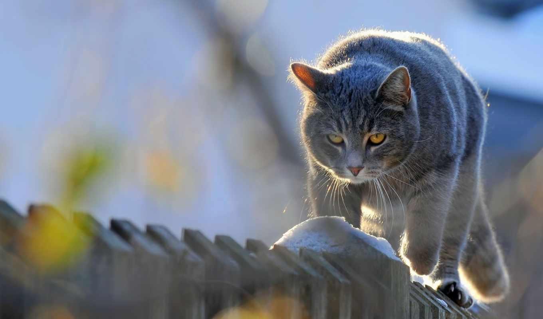 ,, кошка, млекопитающее, усы, small to medium sized cats, cat like mammal, живая природа,  морда, domestic short haired cat, british shorthair, himalayan cat, котенок, леопард, farm cat, полосатый кот, desktop wallpaper, домашнее животное, животное