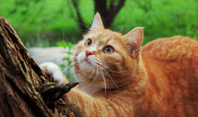 summer, дерево, кот, шерсть, род, хороший, лапа, narrow