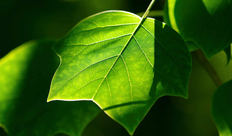, leaves,