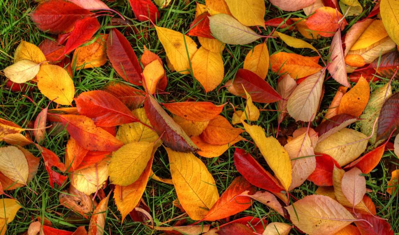 листья, трава, разноцветные,