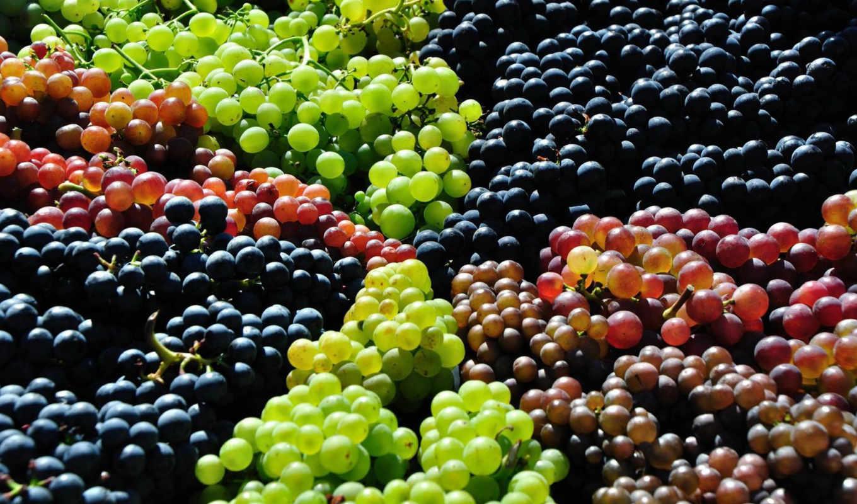 виноград, красивые, качественные, красивых,