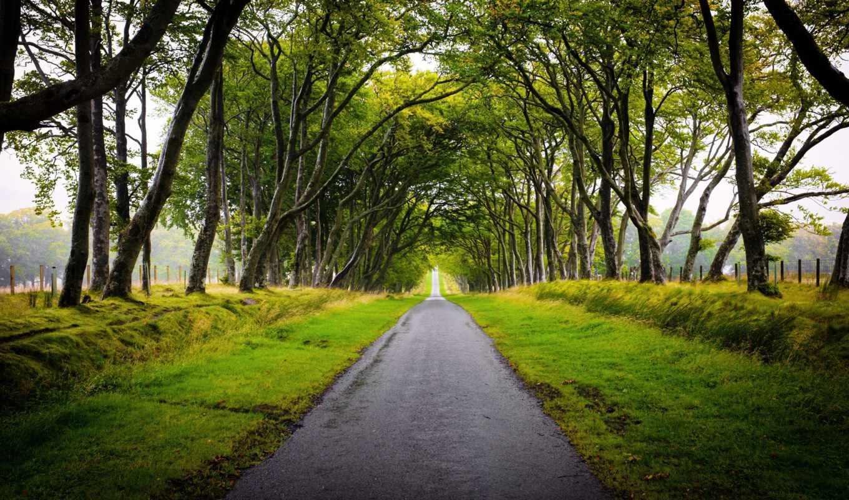 шотландия, landscape, дорога, оллея, деревья, scotland