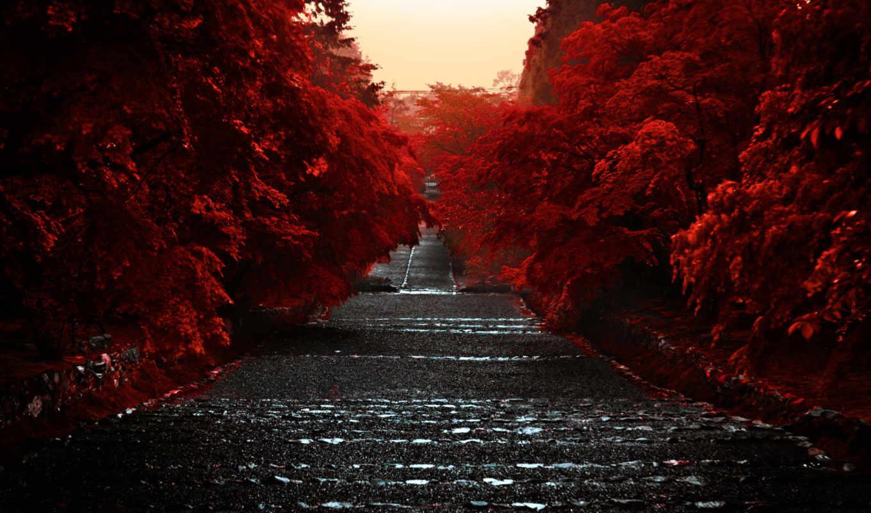 япония, хонсю, остров, kyoto, красные, префектура, гора, широкоформатные,