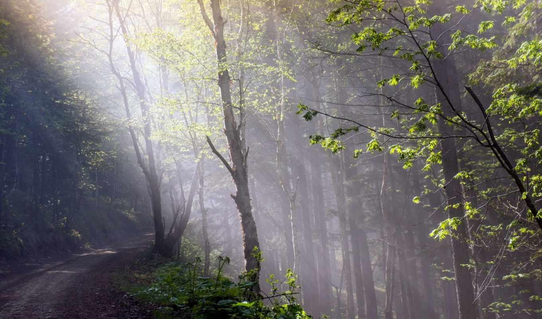 paisajes, naturaleza, fondos, pantalla, bosques, hojas, luz, rboles,