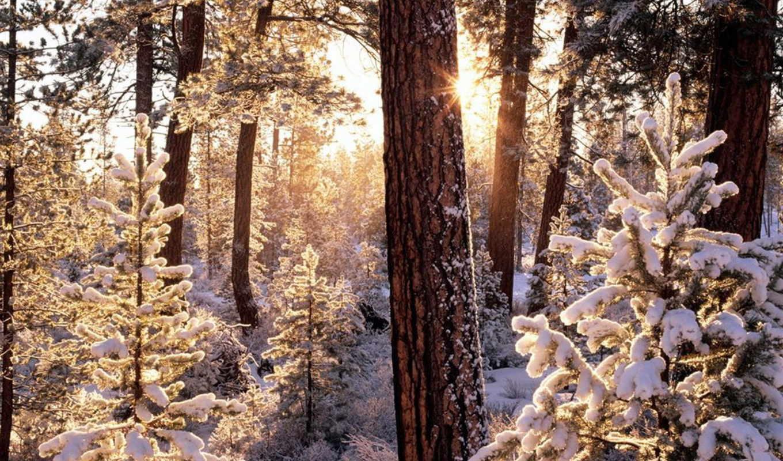 лес, winter, лесу, sun, зимнем, снег, деревя, иней, свой, eli,