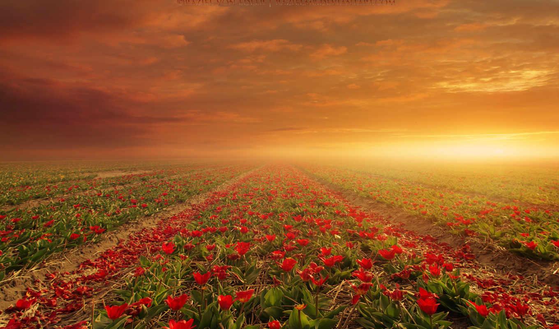 поле, цветы, flowers, природа,