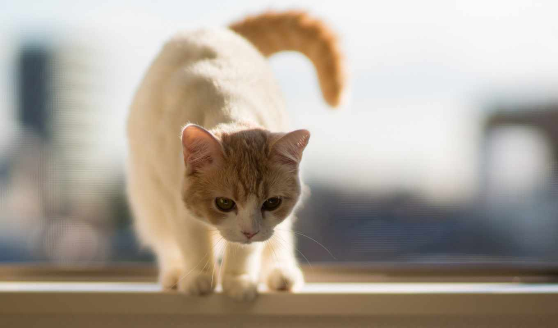 iphone, кот, лет, однако, tail, сладкое, feline,
