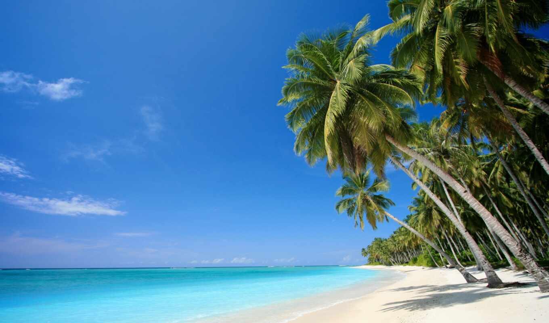 palma, пляж, фотообои, more, morit, berech, tropik, океан, zona, priroda, tropicheskii