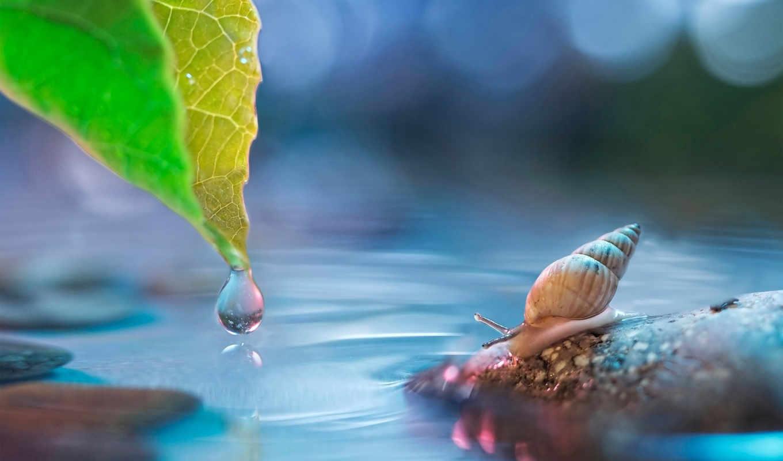 вода, улитки, животные, улитка, домик, камни, капля, рожки,