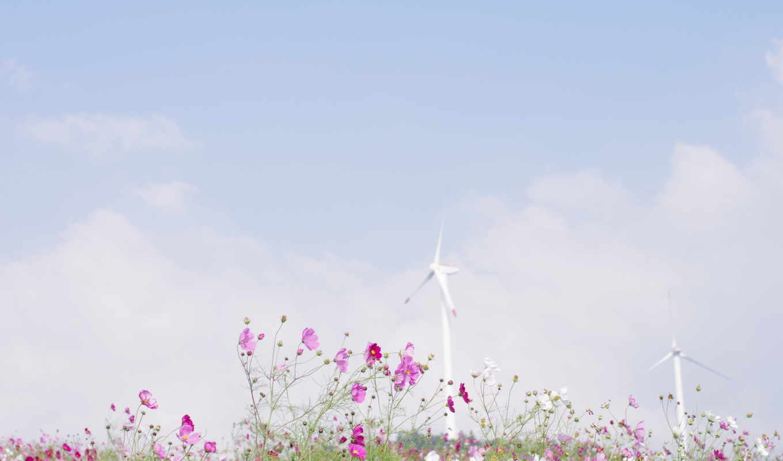 графика, небо, цветы, голубое, поле, весна, природа, лепестки, dream,
