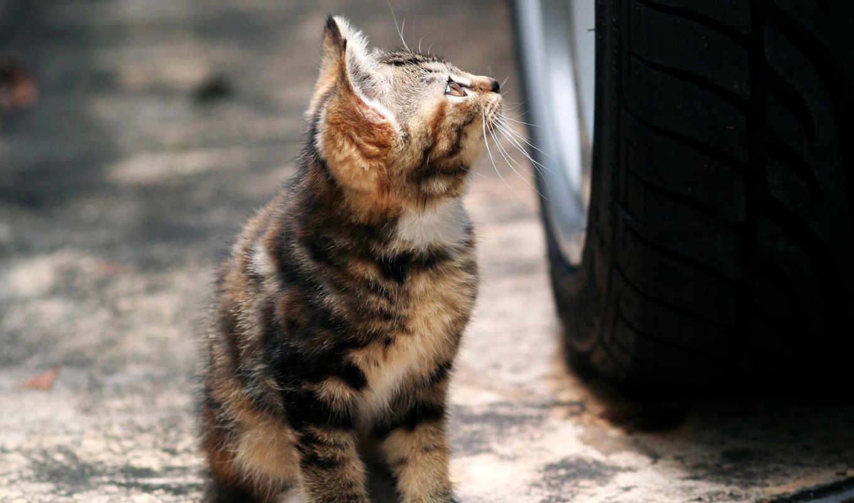 кошки, собаки, бомжи, кот, животные, животных, кошек, нов, бродячие, problem, собака, нечто,