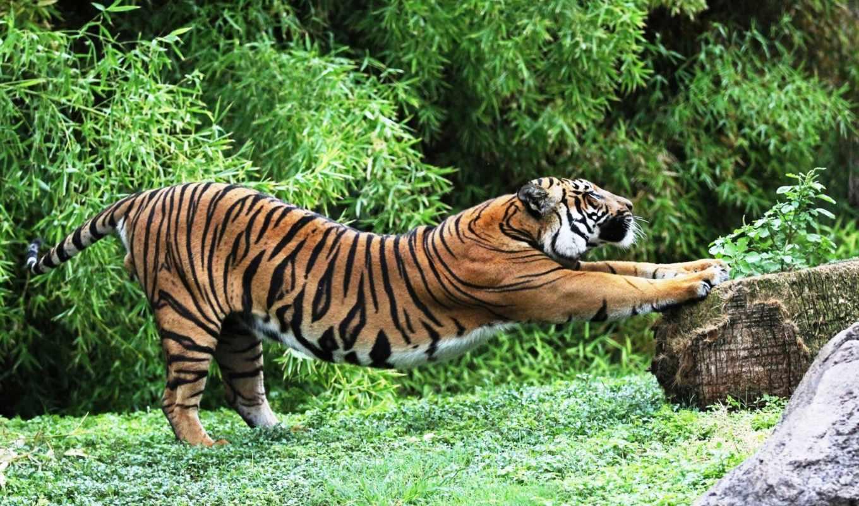 тигр, взгляд, тигра, хищник, ложь, water, ухмылка, кот, glass, осколки,