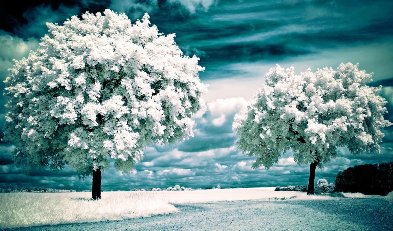 trees, landscape, infrared, деревя, горы,